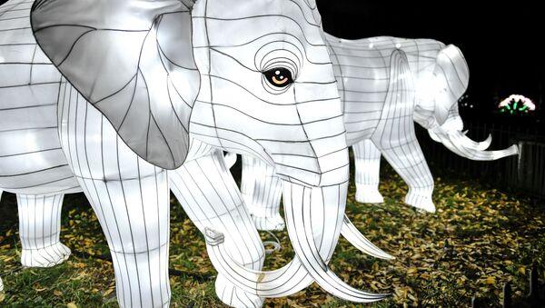 Instalacja ze słoniem w Paryżu - Sputnik Polska