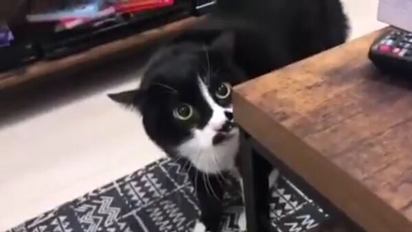 Kot, który koncertuje po gruzińsku - Sputnik Polska
