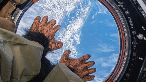 Zabawka małpka na pokładzie MSK - Sputnik Polska