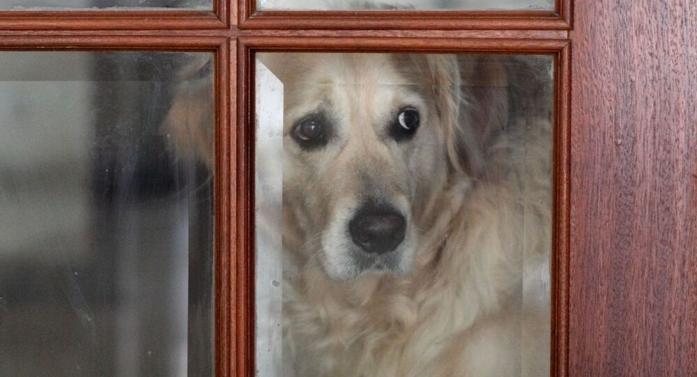 Pies za zamkniętymi drzwiami