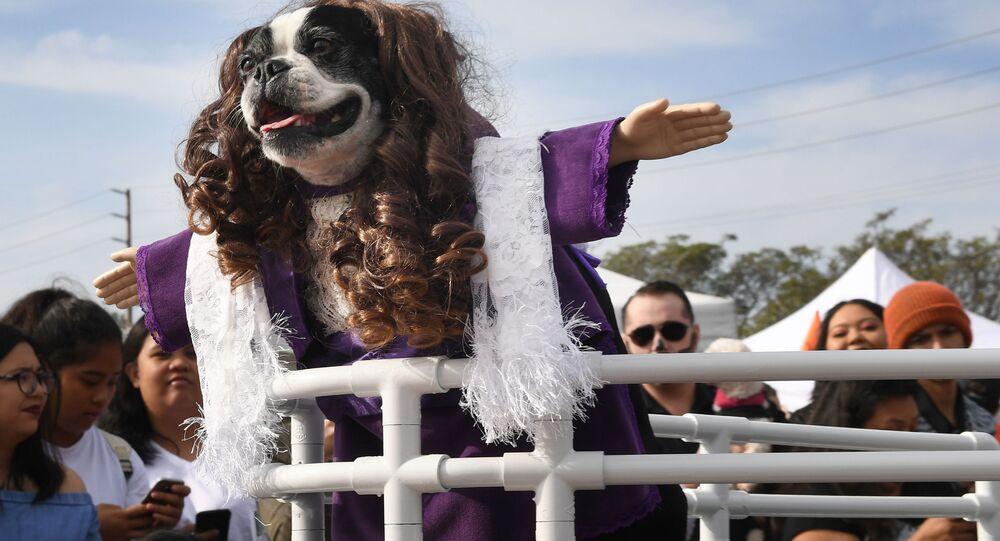 Pies parodiujący film Titanic