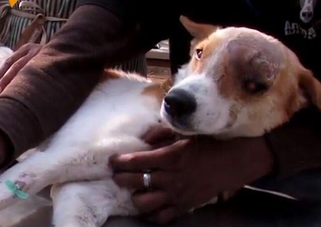 Pies chory na raka