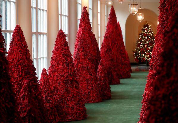 Drzewa z czerwonych jagód w Białym Domu w Waszyngtonie - Sputnik Polska