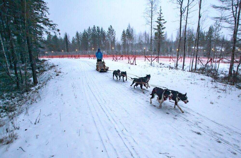 Psi zaprzęg na terytorium rezydencji karelskiego Dziadka Mroza
