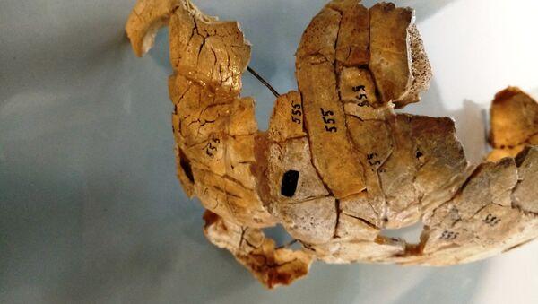 Rozbita i przepalona czaszka znaleziona pół wieku temu w czasie prac wykopaliskowych na brzegu Narwi w północno-wschodniej Polsce - Sputnik Polska