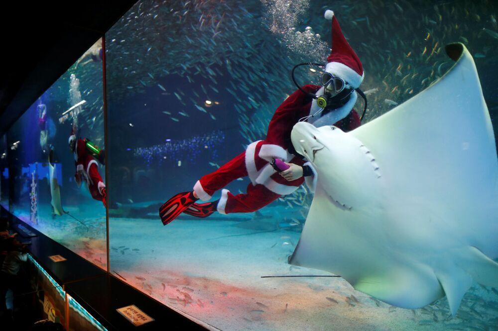Nurek w kostiumie Świętego Mikołaja podczas występu w Seulu