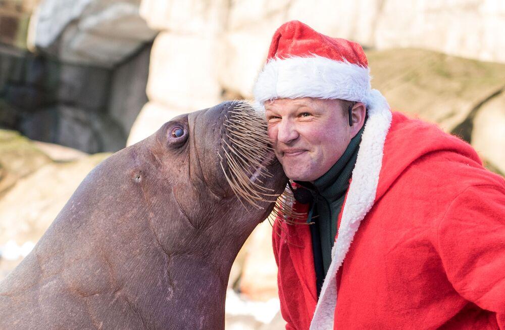 Treser przebrany w strój Świętego Mikołaja z morsem w Hamburgu