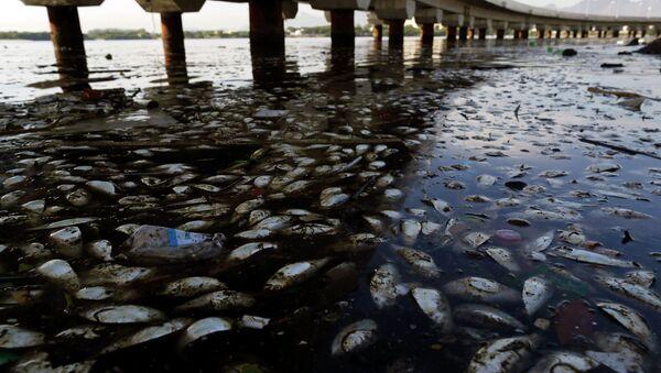 Martwe ryby w Rio de Janeiro - Sputnik Polska