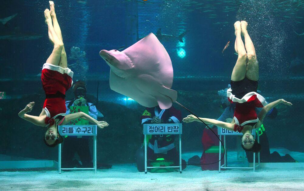 Nurkowie w strojach Świętego Mikołaja w oceanarium COEX w Seulu, Korea Południowa