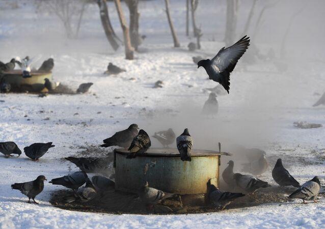 Nowosybirsk