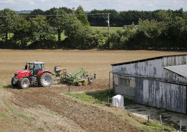 Gospodarstwo rolne przed zbiorem plonów