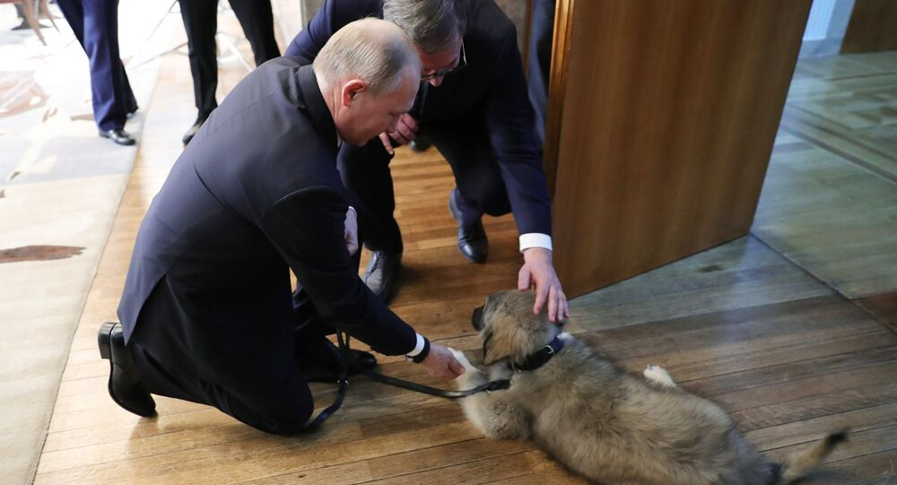 Pies Putina