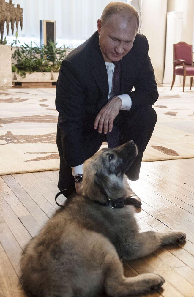 Prezydent Serbii podarował Putinowi psa