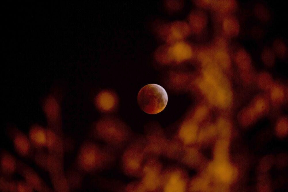 Krwawy Księżyc w Belgii