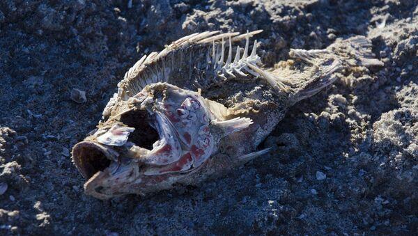 Szkielet ryb na piasku - Sputnik Polska