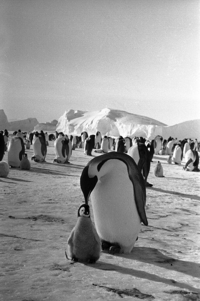 Kadr z filmu dokumentalnego Powieść o pingwinach