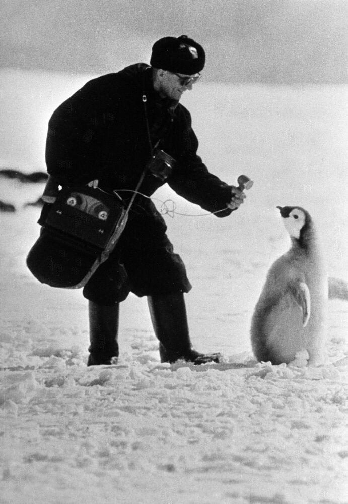 Moskiewski dziennikarz robi wywyiad z pingwinem na Antarktydzie