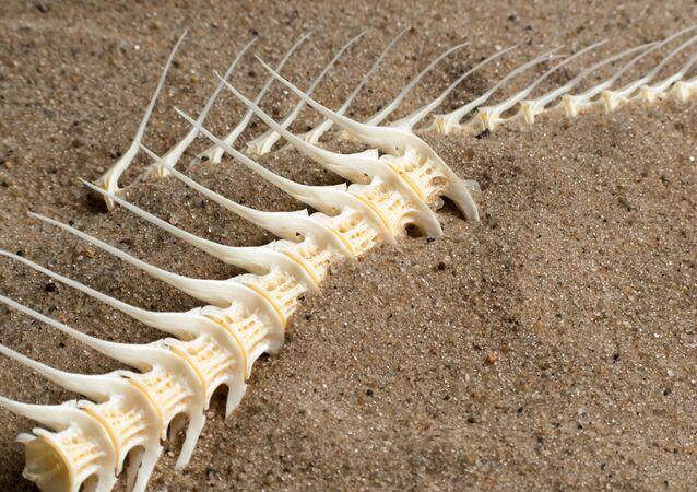 Szkielet ryby