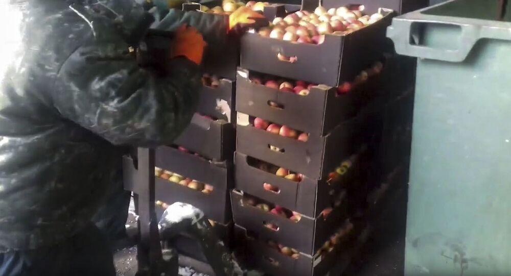 Kadr z wideo z utylizacji polskich jabłek w Krasnojarsku, które są zabronione do importu do Rosji