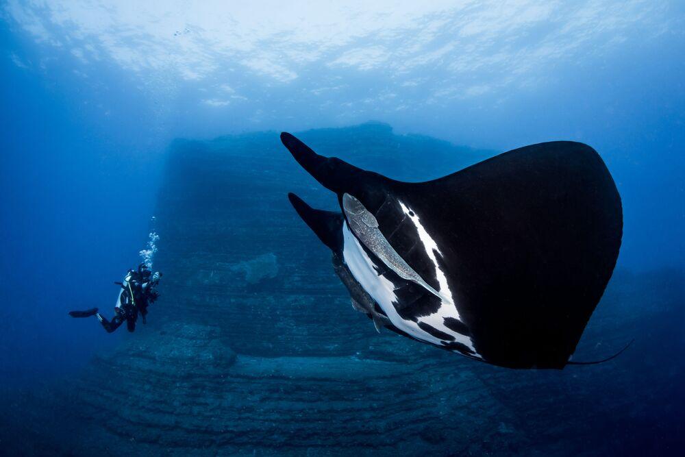 """Olbrzymi diabeł morski na zdjęciu pt. """"Special Encounter"""". I miejsce w kategorii Novice DSLR w konkursie fotograficznym 7th Annual Ocean Art Underwater Photo Contest"""