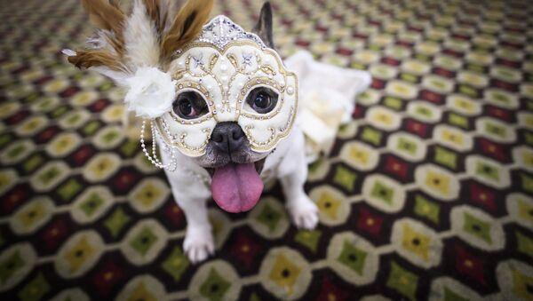 Pies w modnym stroju na 16. corocznym pokazie mody Pet Fashion Show w Nowym Jorku - Sputnik Polska