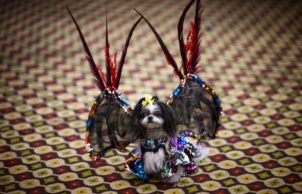 Pokaz mody Pet Fashion Show w Nowym Jorku - Sputnik Polska
