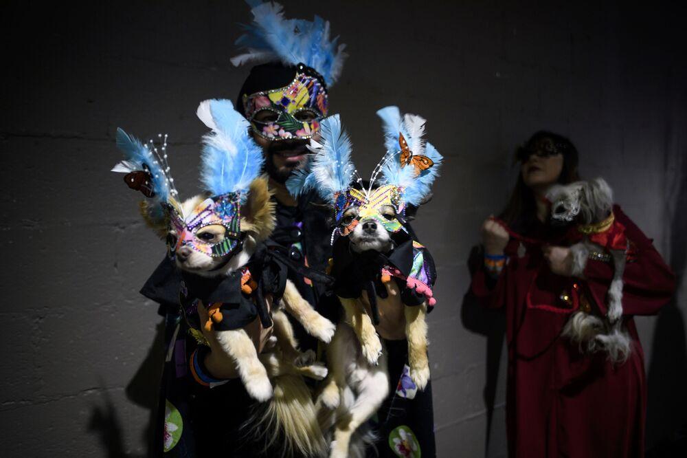 Pokaz mody Pet Fashion Show w Nowym Jorku
