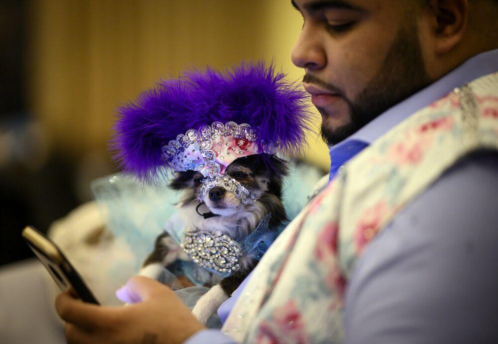 Pies ze swoim właścicielem podczas corocznego pokazu mody Pet Fashion Show w Nowym Jorku