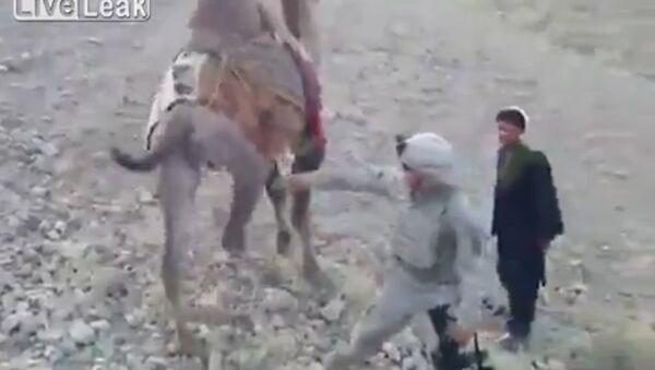 Amerykański żołnierz został poturbowany przez wielbłąda w Afganistanie - Sputnik Polska