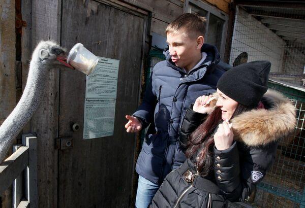 Para karmi strusia w ogrodzie zoologicznym we Władywostoku - Sputnik Polska