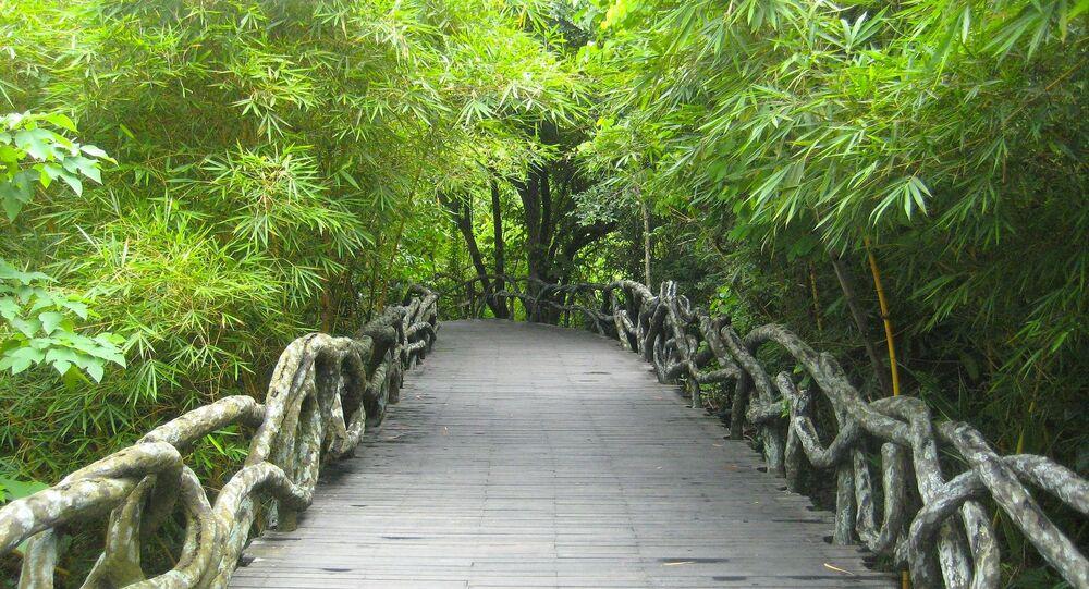 Most wśród zieleni