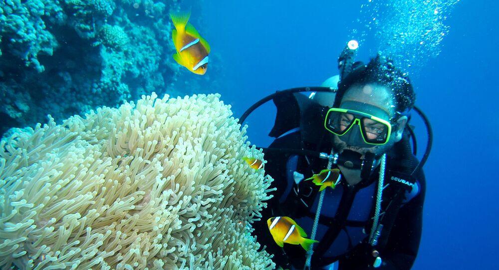Mistrzowie fotografii podwodnej z całego świata spotkali się w Stambule