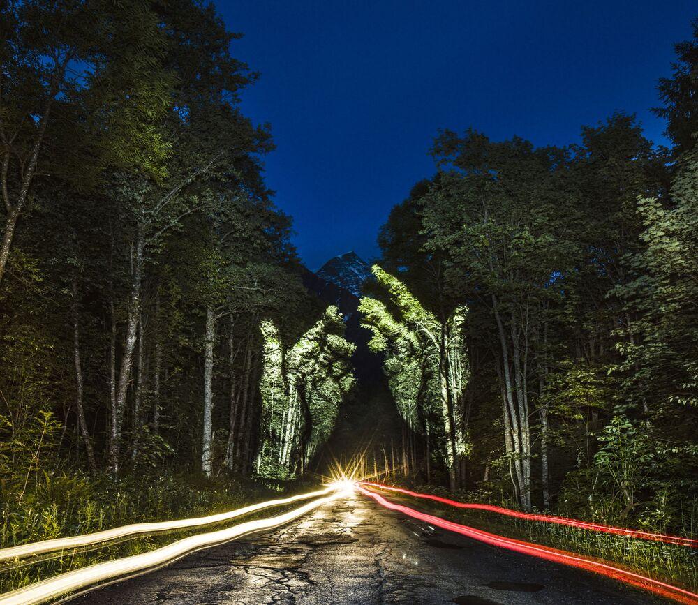 Animacja świetlna na drzewach w Nizinie Amazonki